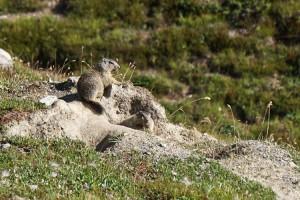 Marmottes - Munt la Schera