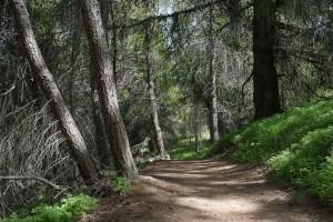 La première chose qui étonne, le vert des forêts est complétement différent de chez nous.