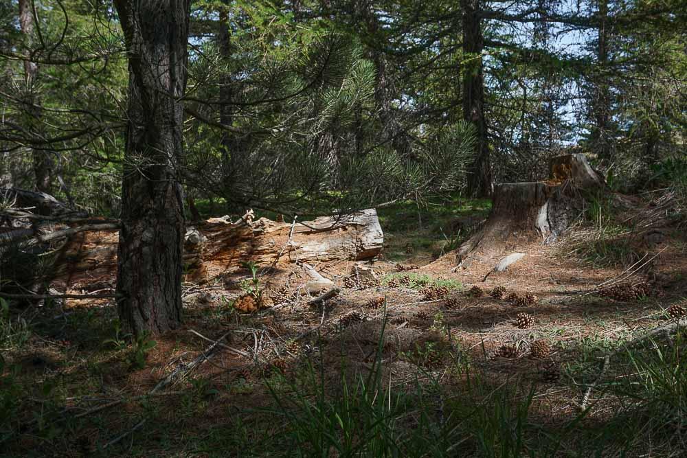 La randonnée commence dans une petite forêt avant de déboucher sur une plaine.