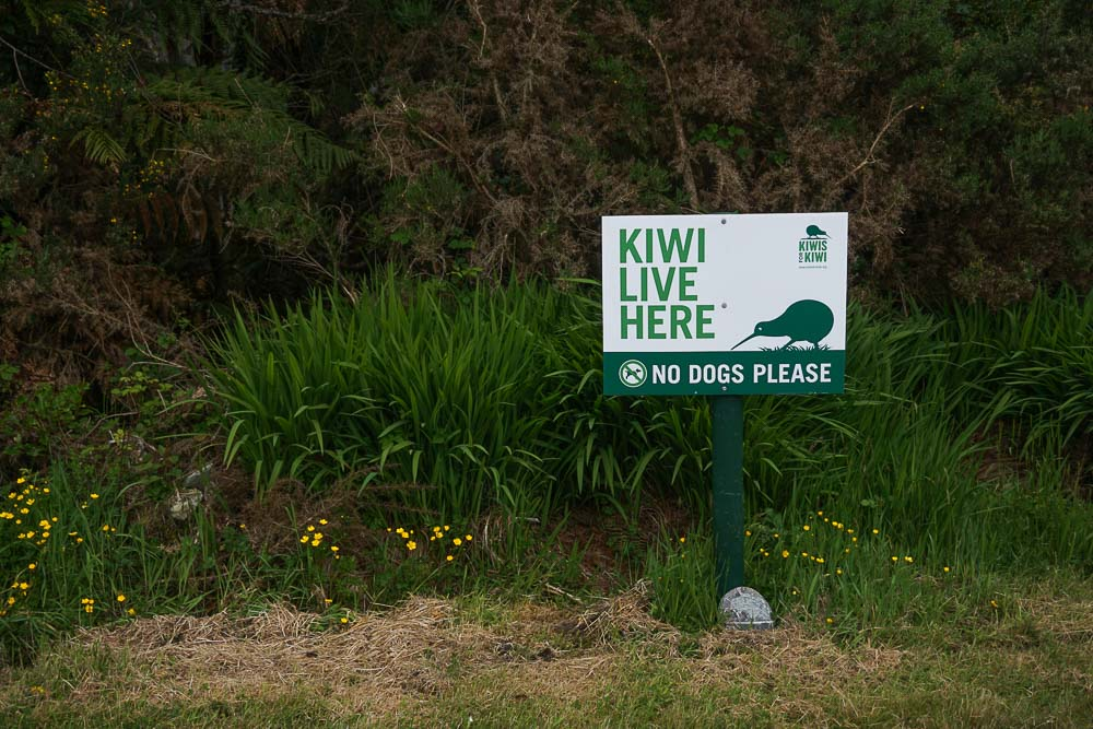 Kiwi_OkaritoLagoon