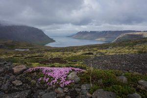 Fjords Ouest Islande
