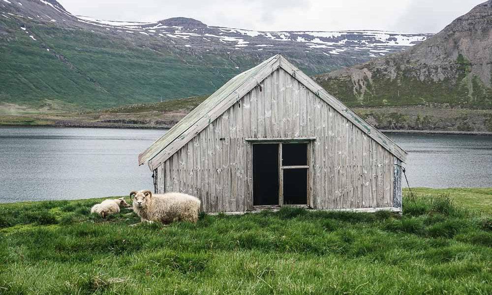 Road trip en Islande – Le nord des fjords de l'Ouest