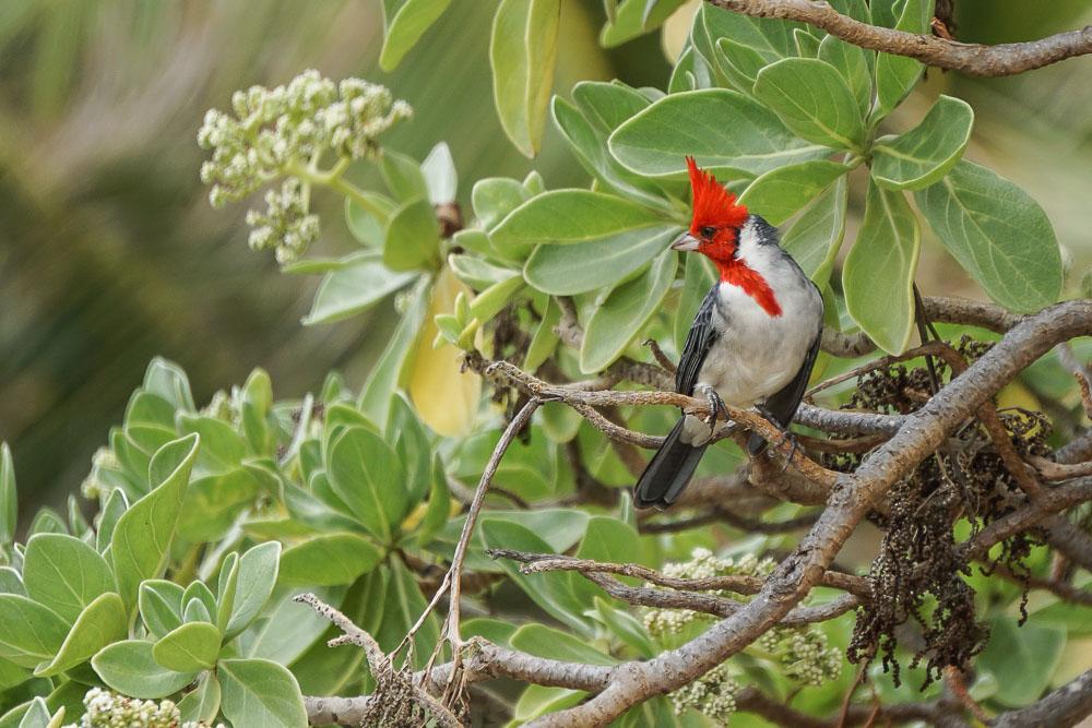 Kauai - Lydgate Beack Park