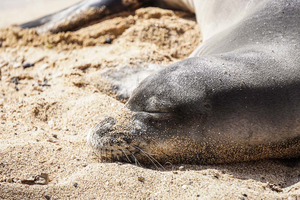 Kauai - Monk Seal - Baby Beach