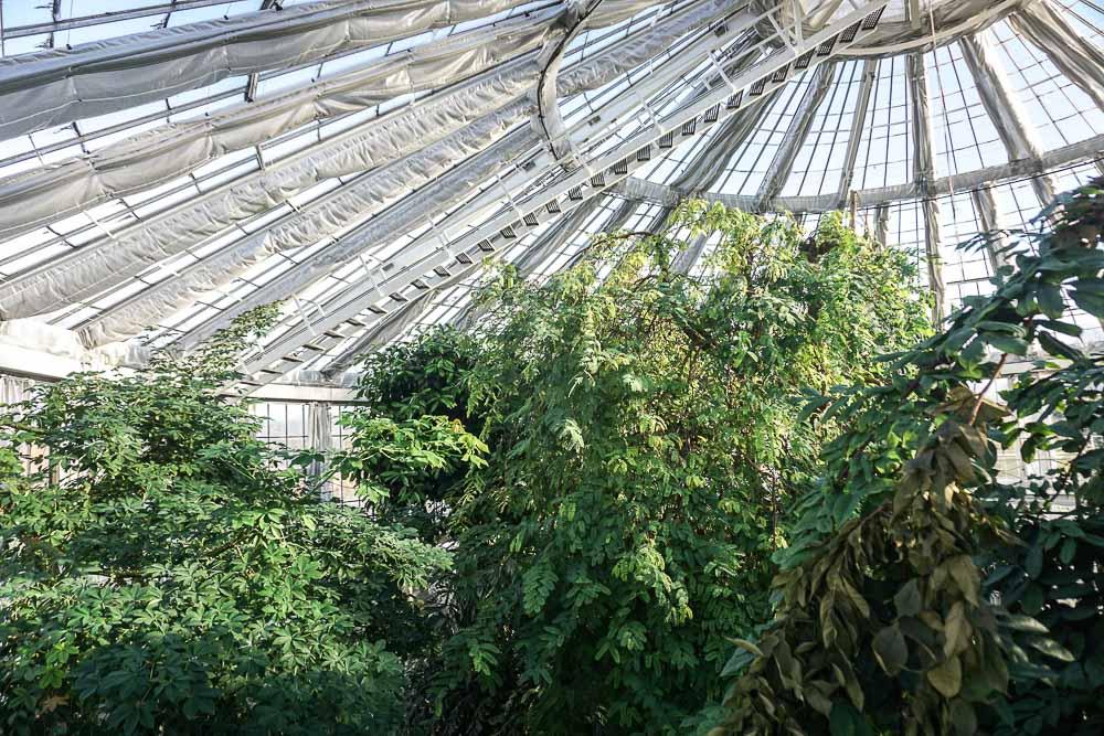City trip à Copenhague - Jardin botanique